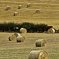 Field Of Hay Bales by Marcia Colelli