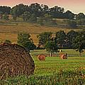 Field Of Hay by Steven Michael