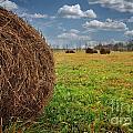 Field Of Haystacks by Jolanta Meskauskiene