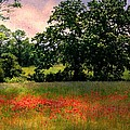 Field Of Poppies by Anne McDonald