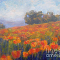 Field Of Poppies by Carolyn Jarvis