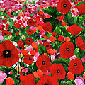 Field Of Poppies by Linda Rauch