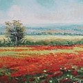 Field Of Poppies by Sorin Apostolescu