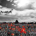 Field Of Red by J Biggadike