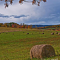 Field Of Round Bales by Timothy Flanigan Debbie Flanigan Nature Exposure