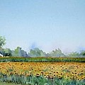 Field Of Sunshine by Patricia Henderson