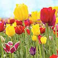 Field Of Tulip Flowers Against Blue Sky by Jit Lim