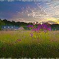 Field Of View Sunset by Randall Branham