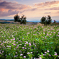 Field Of Wildflowers by Brian Jannsen
