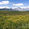 Field Of Yellow by David Crane