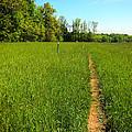Field Path by Glenn Gordon