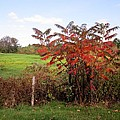 Field With Sumac In Autumn by MTBobbins Photography