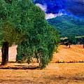 Fields by Cary Shapiro