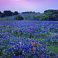 Fields Of Blue by Shere Crossman