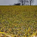 Fields Of Green by Nigel Jones