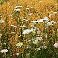 Fields Of Lace by Christi Kraft