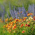 Fields Of Lavender And Orange Blanket Flowers by Lingfai Leung