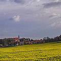 Fields Of Rapeseed In Bloom, Lower by Panoramic Images
