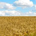 Fields Of Wheat by Jamie Heeke