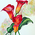 Fiery Callas by Karin  Dawn Kelshall- Best