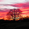 Fiery Oak 2 by Nick Kirby