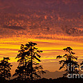 Fiery Sunset by Rima Biswas
