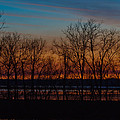 Fiery Sunset by Susie Hoffpauir