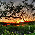 Fiery Swamp Sunset by Deborah Smolinske