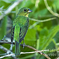 Fifty Shades Of Green by Gary Holmes