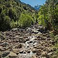 Figarella River In The Foret De Bonifatu In Corsica by Jon Ingall