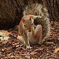 Fighter Squirrel by Nick Difi