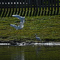 Fighting Birds by Linda Kerkau
