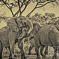 fighting male African elephants by Juergen Ritterbach