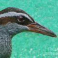 Fijinan Bird 2 by Ben Yassa