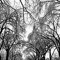 Film Noir Cinematographer Burnett Guffey Glenn Ford Framed 1947  2 Summit Avenue St. Paul Mn 1966 by David Lee Guss