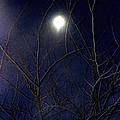 Film Noir Joseph H Lewis So Dark The Night 1946 Moon Trees Casa Grande Arizona 2000 by David Lee Guss