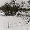 Film Noir Nicholas Ray Ida Lupino On Dangerous Ground 1952 1 Rko Radio Fence Near Aberdeen Sd 1965 by David Lee Guss