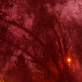 Film Noir Orson Welles Joseph Cotten Journey Into Fear 1942 Summer Storm Trees Casa Grande 2004 by David Lee Guss