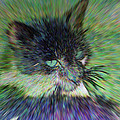 Filtered Cat by Brian Wallace