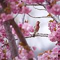 Finch Frame by Andrea Goodrich
