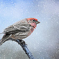 Finch In The Snow by Jai Johnson