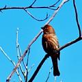 Finch On Branch 031015a by Edward Dobosh
