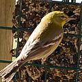 Finch by Robert Floyd