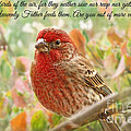 Finch With Verse New Version by Debbie Portwood