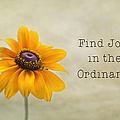 Find Joy by Kim Hojnacki