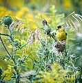 Find The Finch by Cheryl Baxter