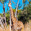 Find The Giraffe by Greg Fortier