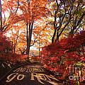 Find Yourself Go Run Autumn Leaves Fall Season by Beverly Claire Kaiya