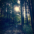 Find Yourself Go Run No. 6 - Forest With Sun Flare by Beverly Claire Kaiya