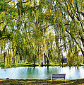 Finger Lakes Weeping Willows by Mitchell R Grosky